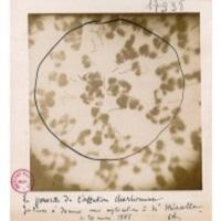 Laboratoire de Photomicrographie